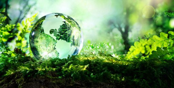 glass globe in woods environment